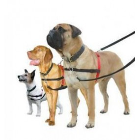 Harnais  HALTI pour chien  Compagny of animals