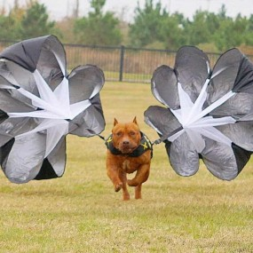 Parachute Resistance Training pour XVEST DOG