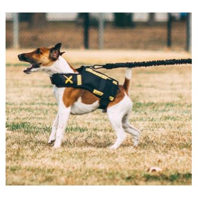 Elastique Resistance Training pour XVEST DOG